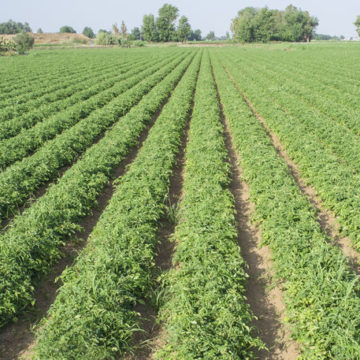 Guía para Prevención y Control del COVID-19 en explotaciones agrarias con temporeros